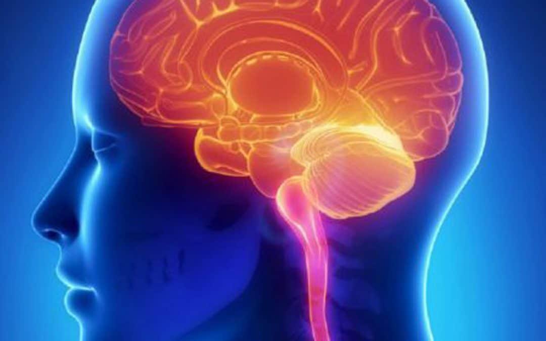 Tu Estrés en Cerebro y Cuerpo